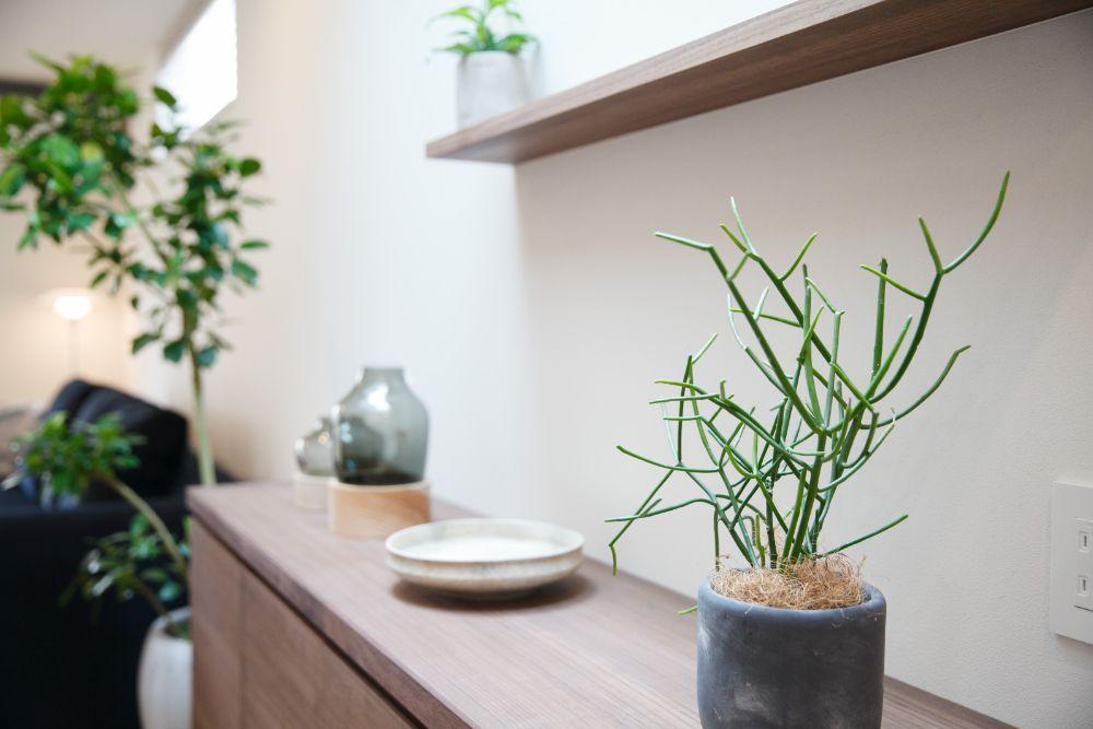 植物の置かれた棚