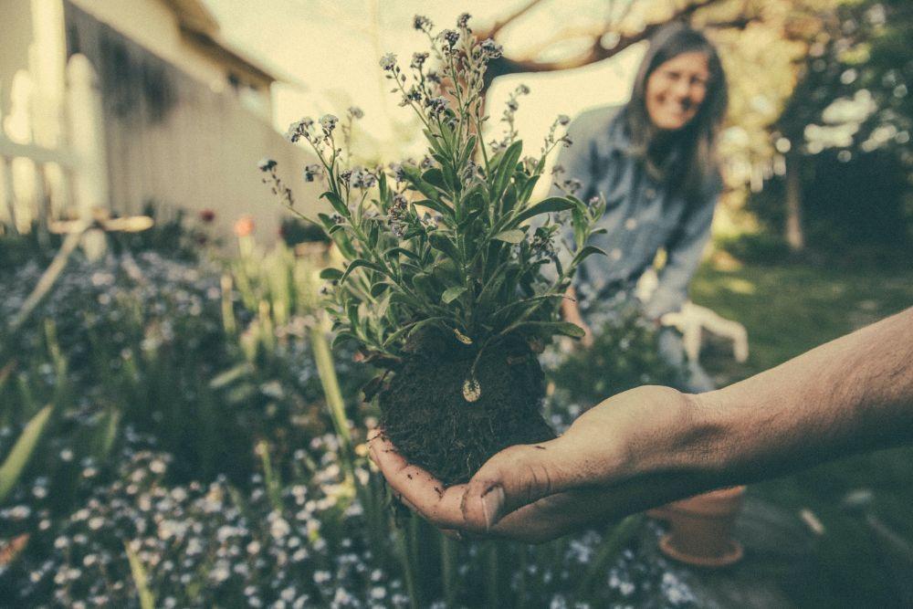苗木を持つ人