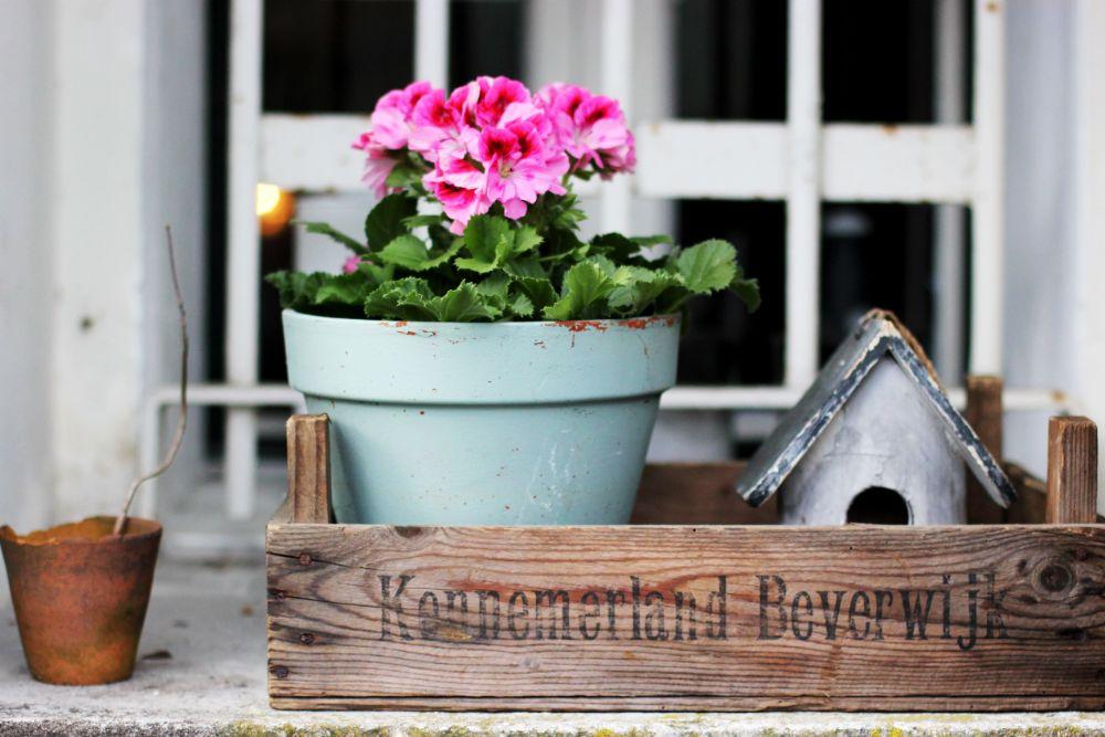 アンティークな感じの植木鉢に咲く花