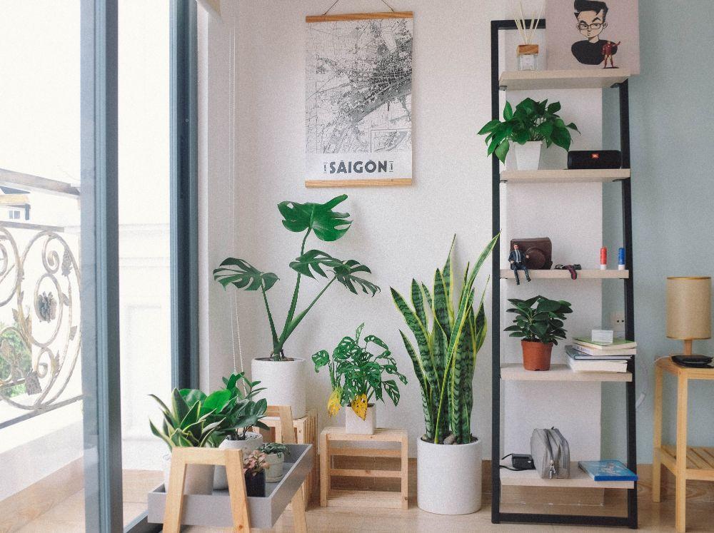 植物の飾られた部屋