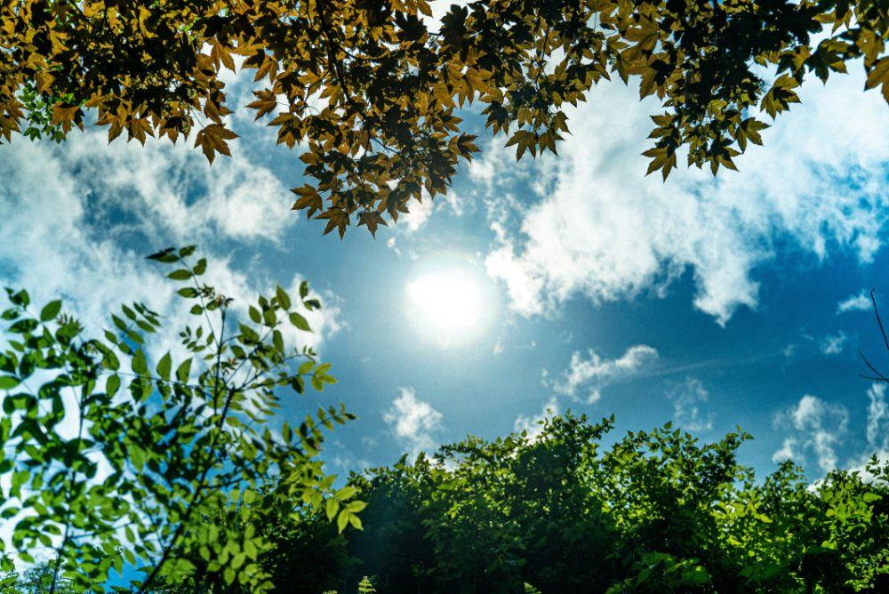 木々の隙間から見える太陽