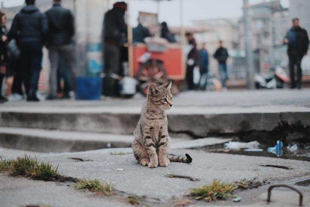 野良猫対策