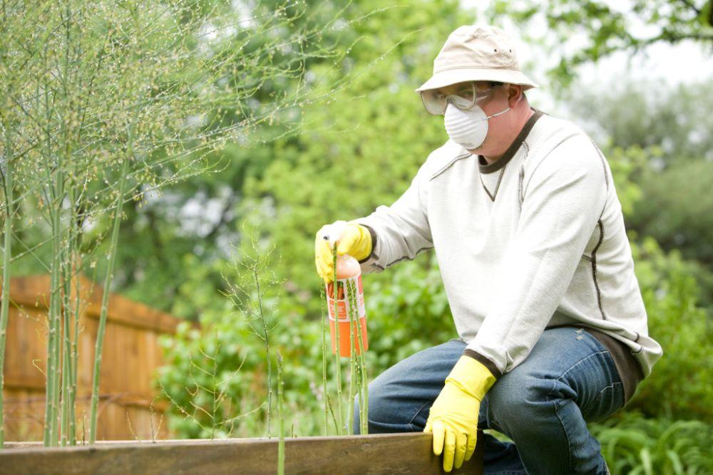 植物に殺虫スプレーを吹き付けている様子