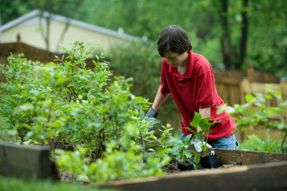 家庭菜園をしている人の様子