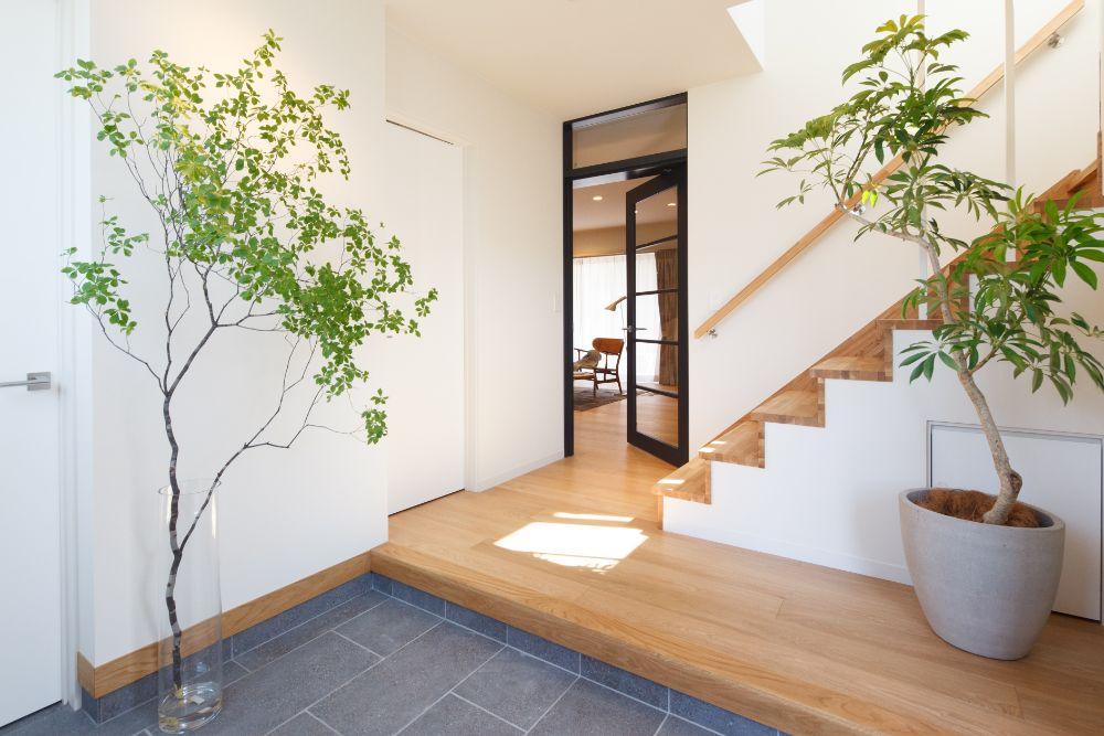 植物の置かれている玄関