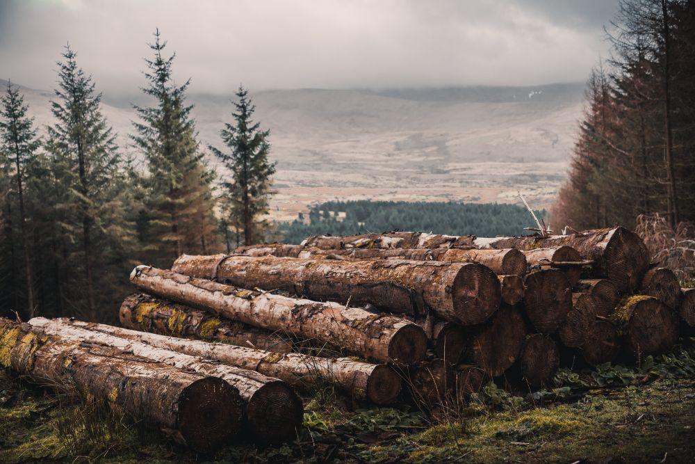 斬られた木材