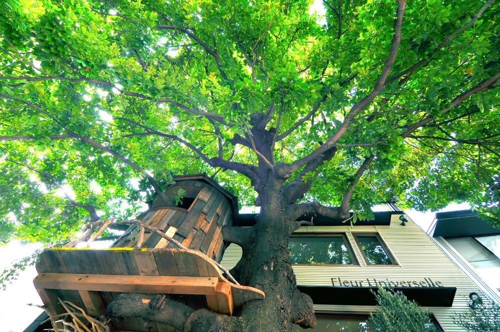 レ・グラン・ザルブルのツリーハウス