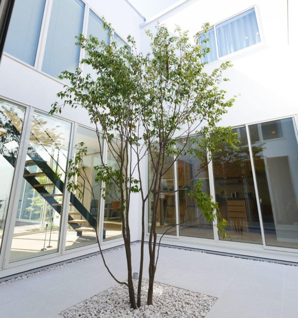 中庭にシンボルツリーのある住宅