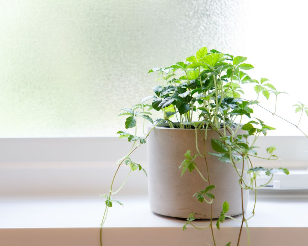 窓際に置かれた植物