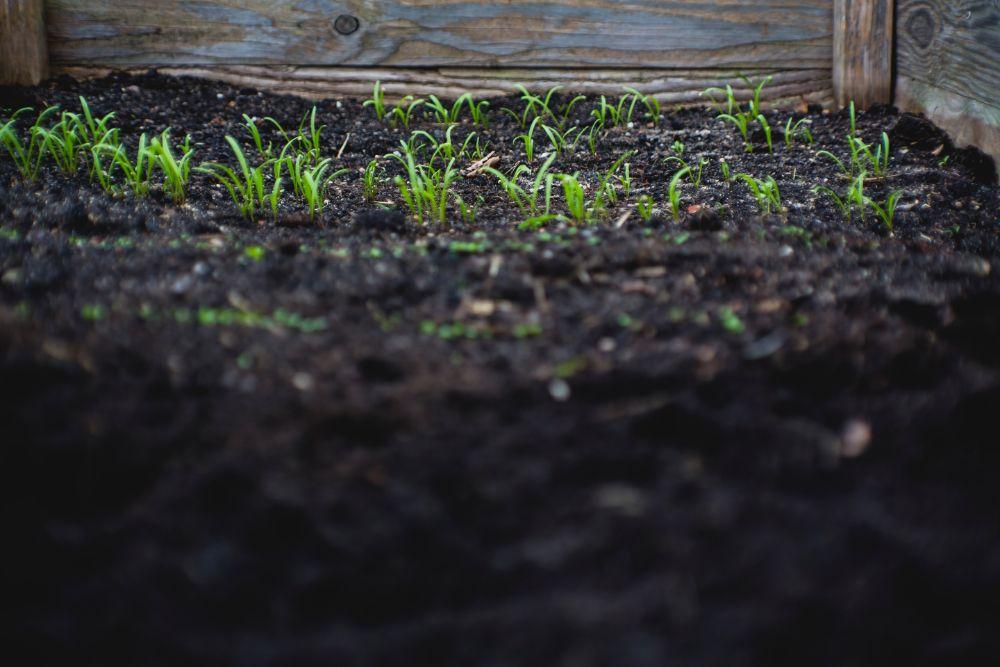 草の生えた土