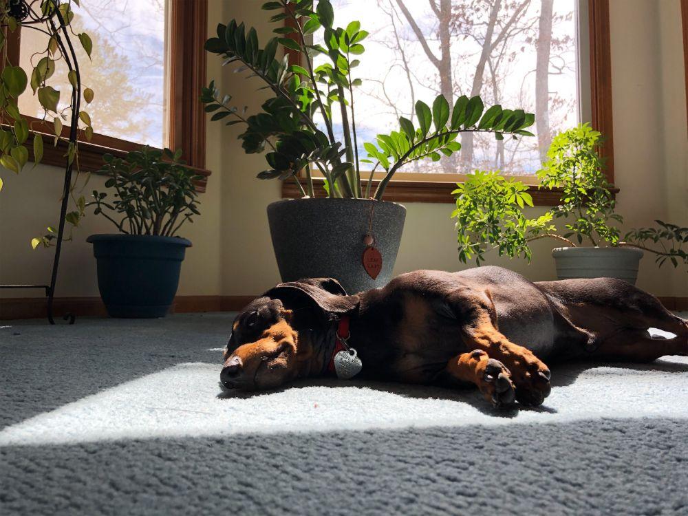 インナーテラスの日向部分で寝転がる犬