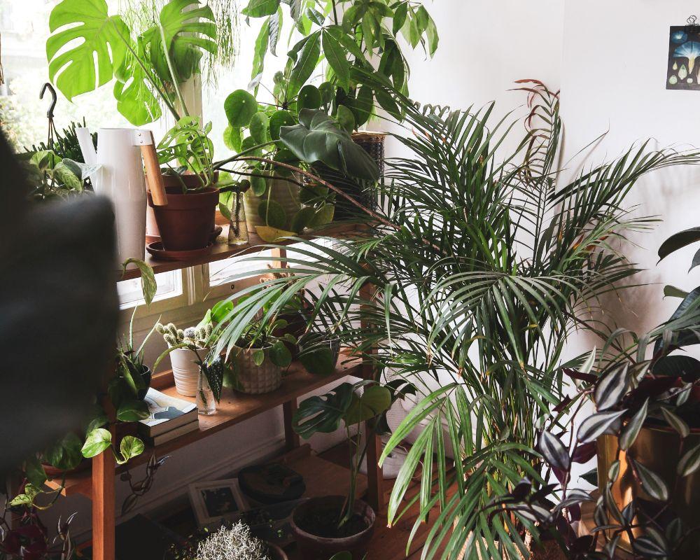 植物の置かれたラック