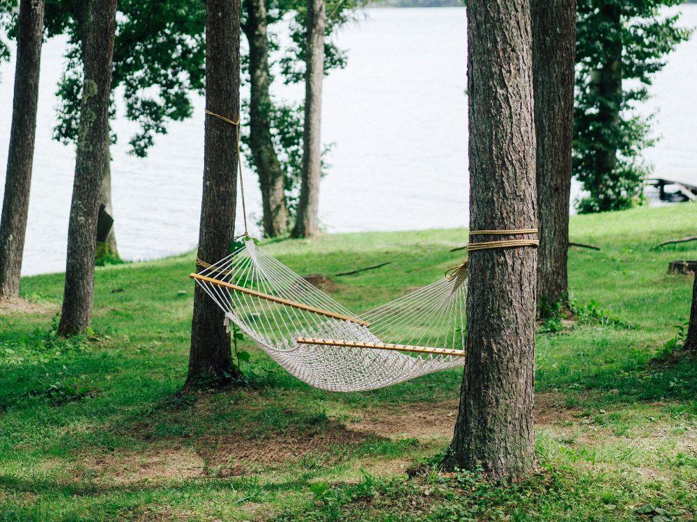 ハンモックの吊られた木