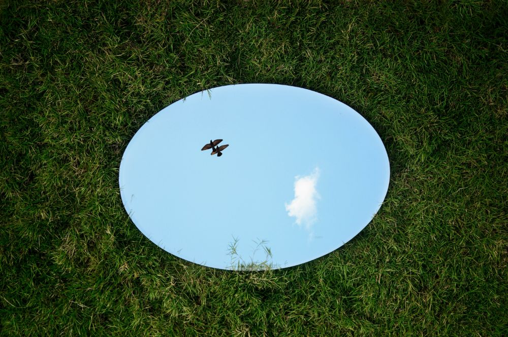 芝生の上に置いた鏡に鳥がうつっている