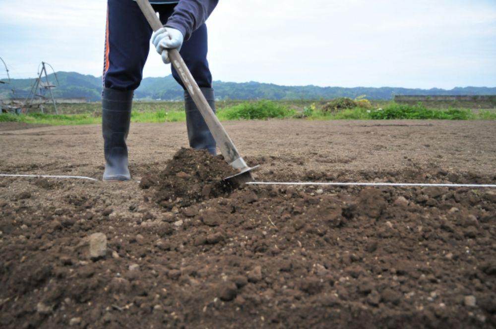 畑を耕している人