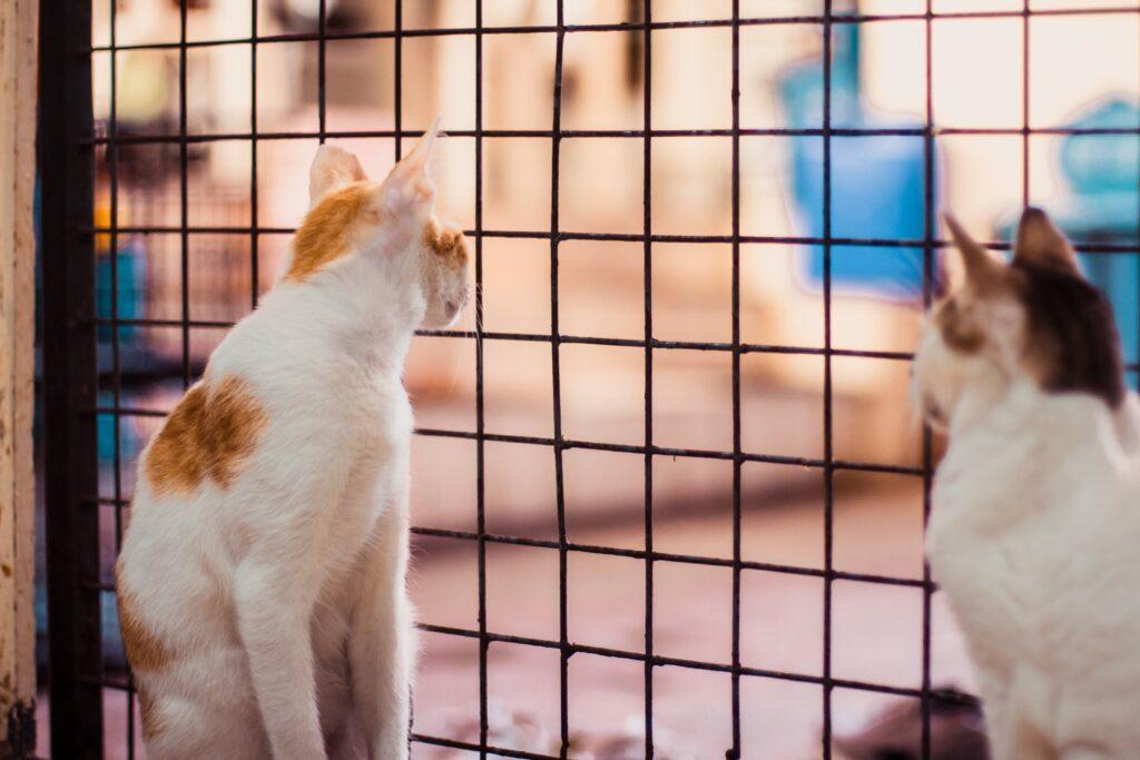 猫2匹が柵の手前で座っている様子