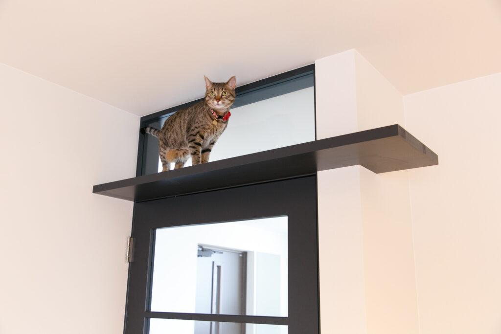 出入り口上にある猫用に作られた建具