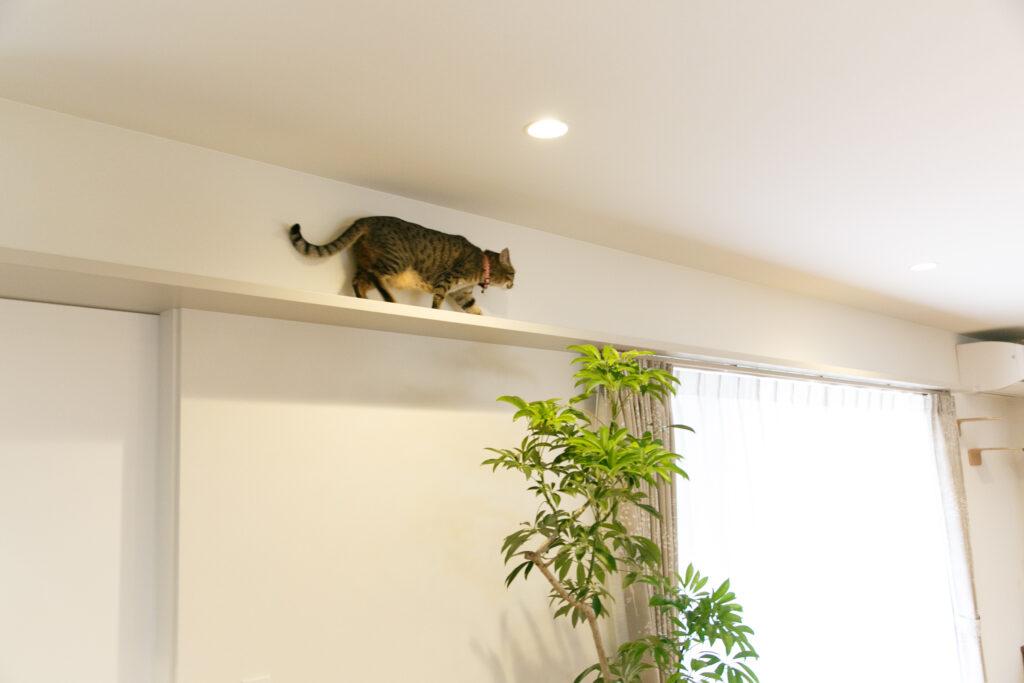 猫用に作られた高い位置の通路を渡る猫