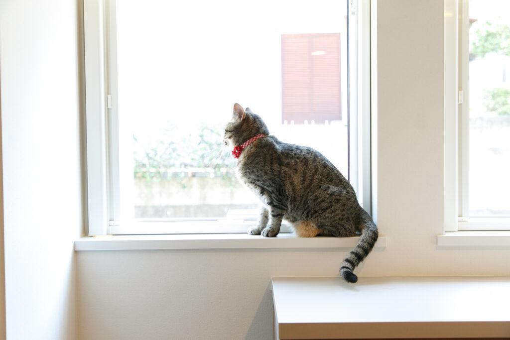 窓際に座る猫