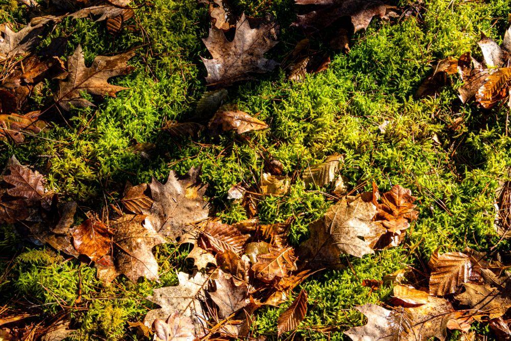 苔の上に落ち葉が落ちている様子