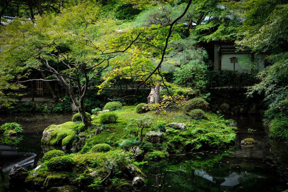池に浮かぶ苔庭