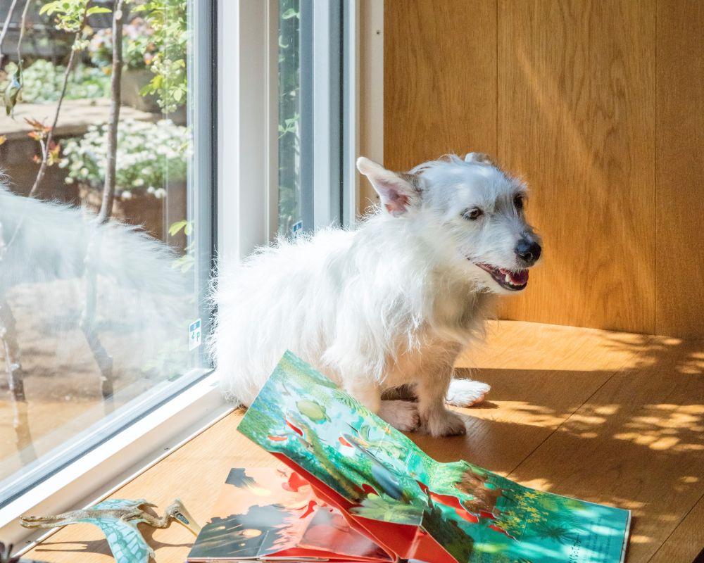 窓際に座っている犬