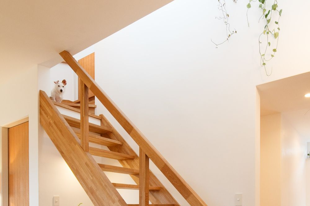 階段にいる犬