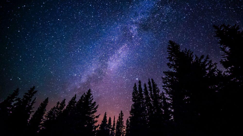 星空のきれいな森