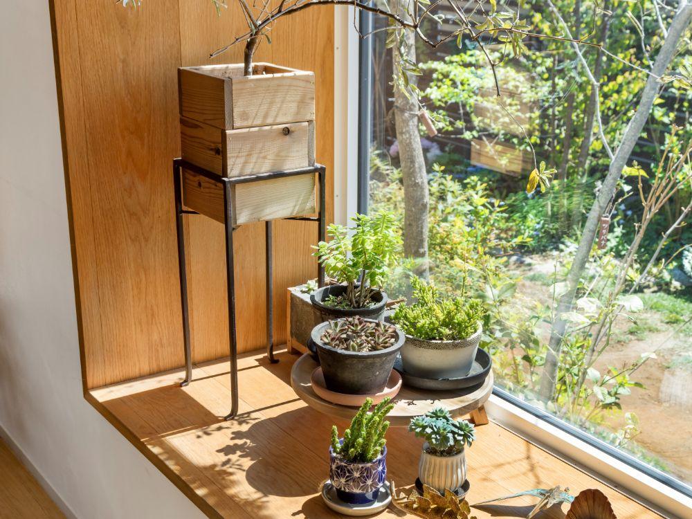 鉢の種類が違う植物