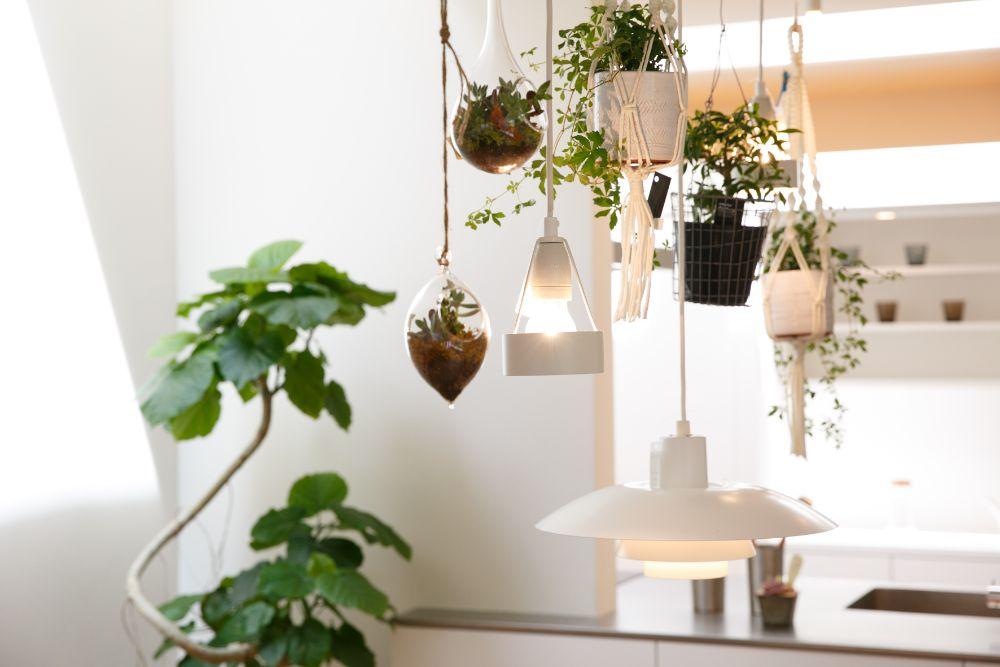 照明と一緒に天井からするされた植物